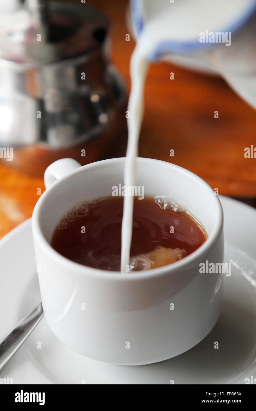 Versare il latte nel tè Immagini Stock