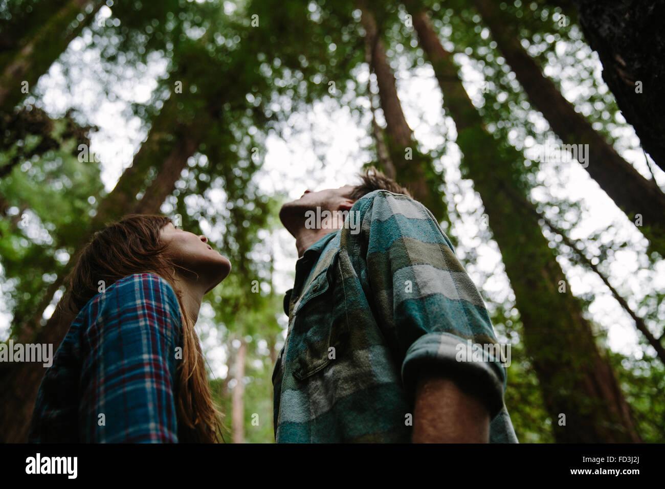 Coppia giovane guardano verso le cime dei torreggianti alberi di sequoia. Big Sur, California. Immagini Stock