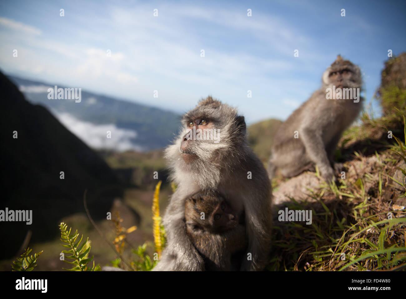 Le scimmie in montagna Immagini Stock
