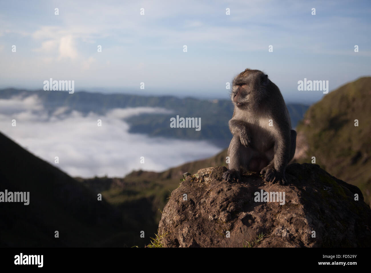Monkey guardando lontano sul paesaggio Immagini Stock
