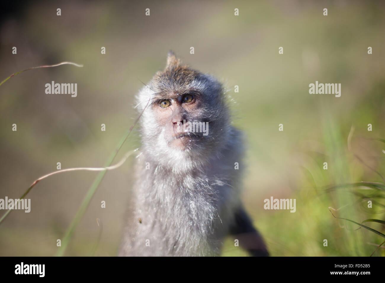 Ritratto di una scimmia Immagini Stock