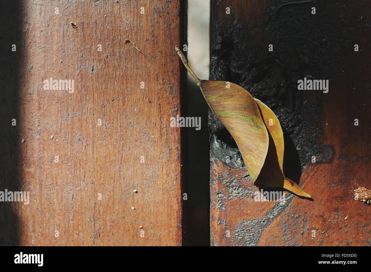 Primo piano di foglie di secco sulla superficie di legno Immagini Stock