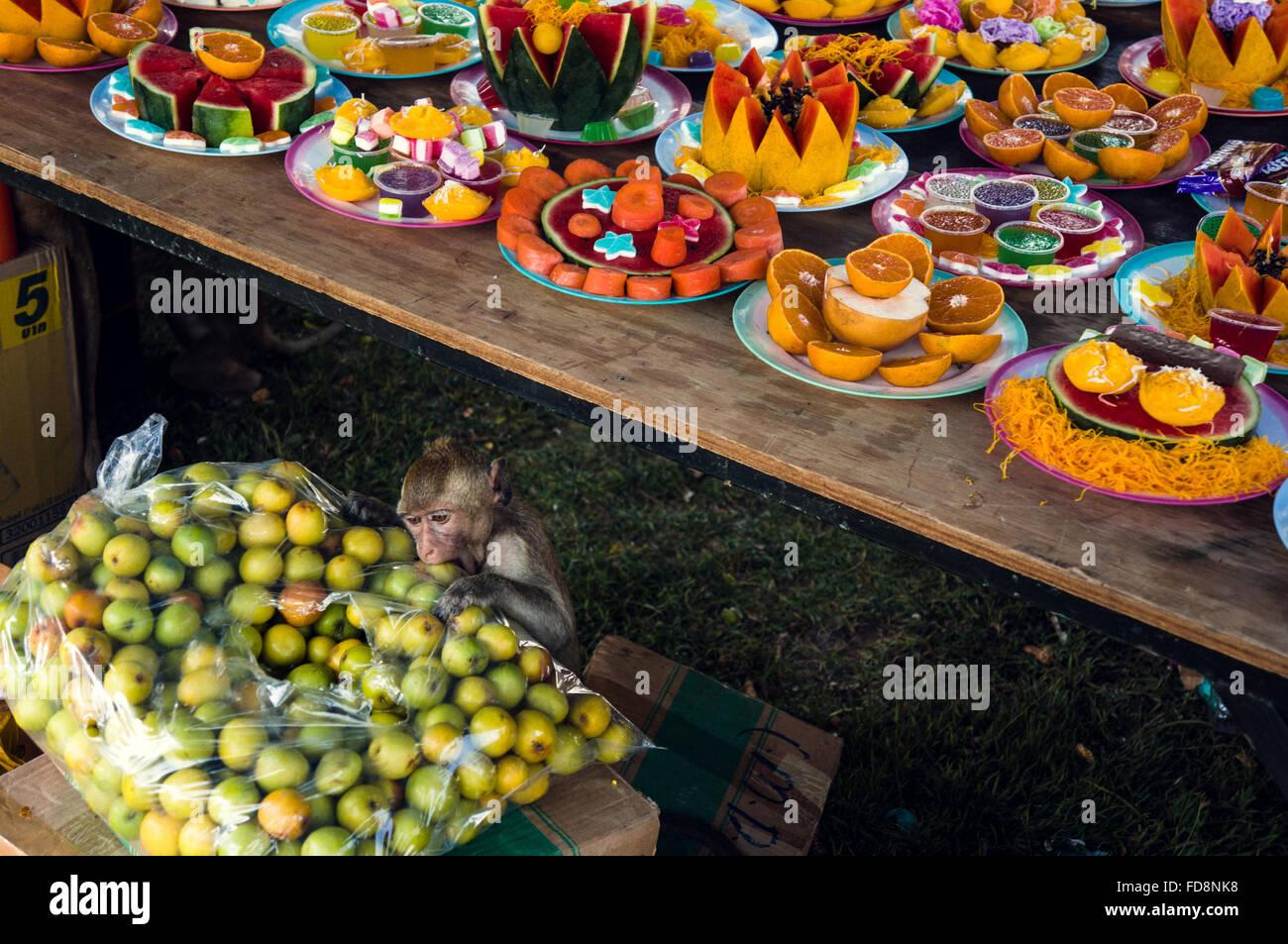 Monkey in stallo alimentare nella tradizionale festa Immagini Stock