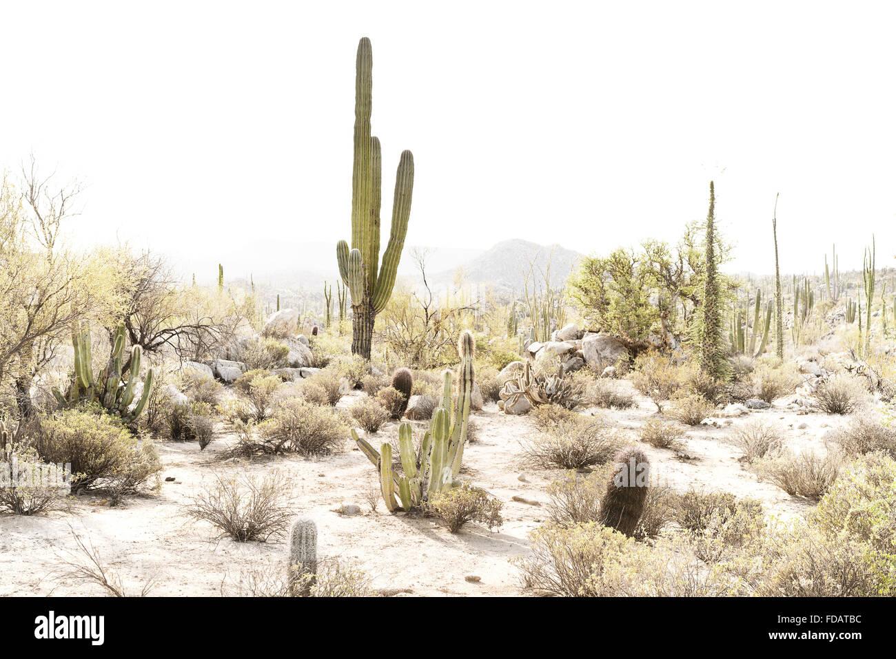 La scena del deserto in Baja California, Messico Foto Stock