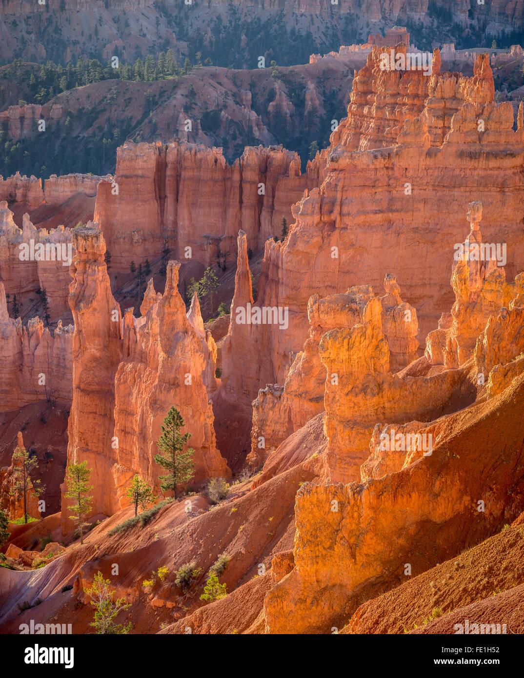 Parco Nazionale di Bryce Canyon, UT: sole di mattina nel Bryce anfiteatro la retroilluminazione hoodoos e pinnacoli Immagini Stock