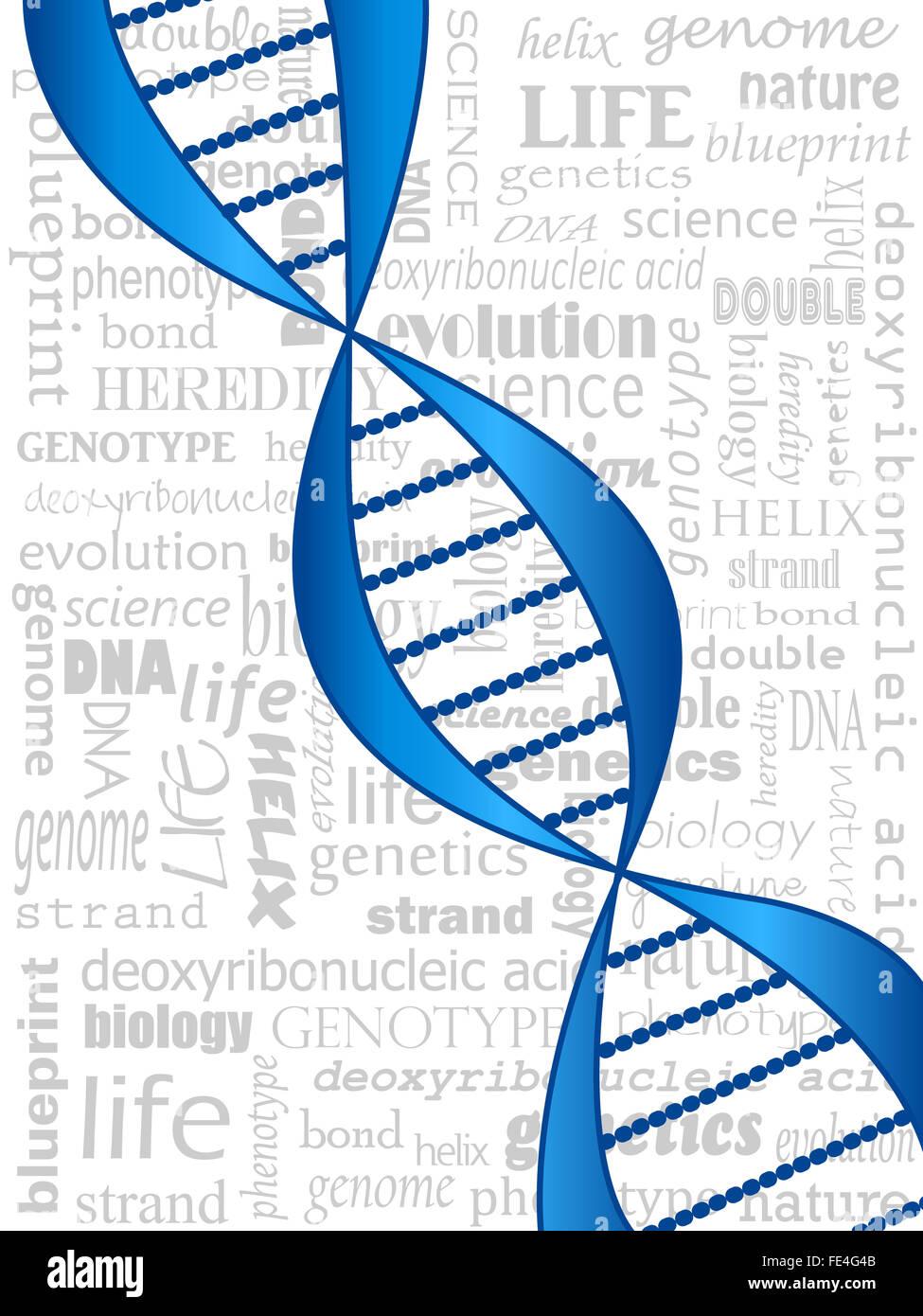La doppia elica del DNA su correlati sfondo di parola Immagini Stock