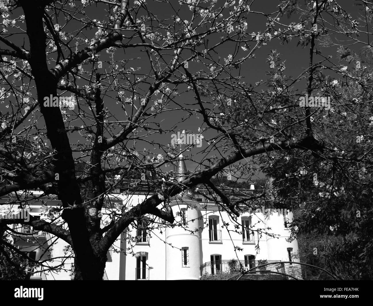 Tree che blocca la visualizzazione dell'edificio contro Sky Immagini Stock