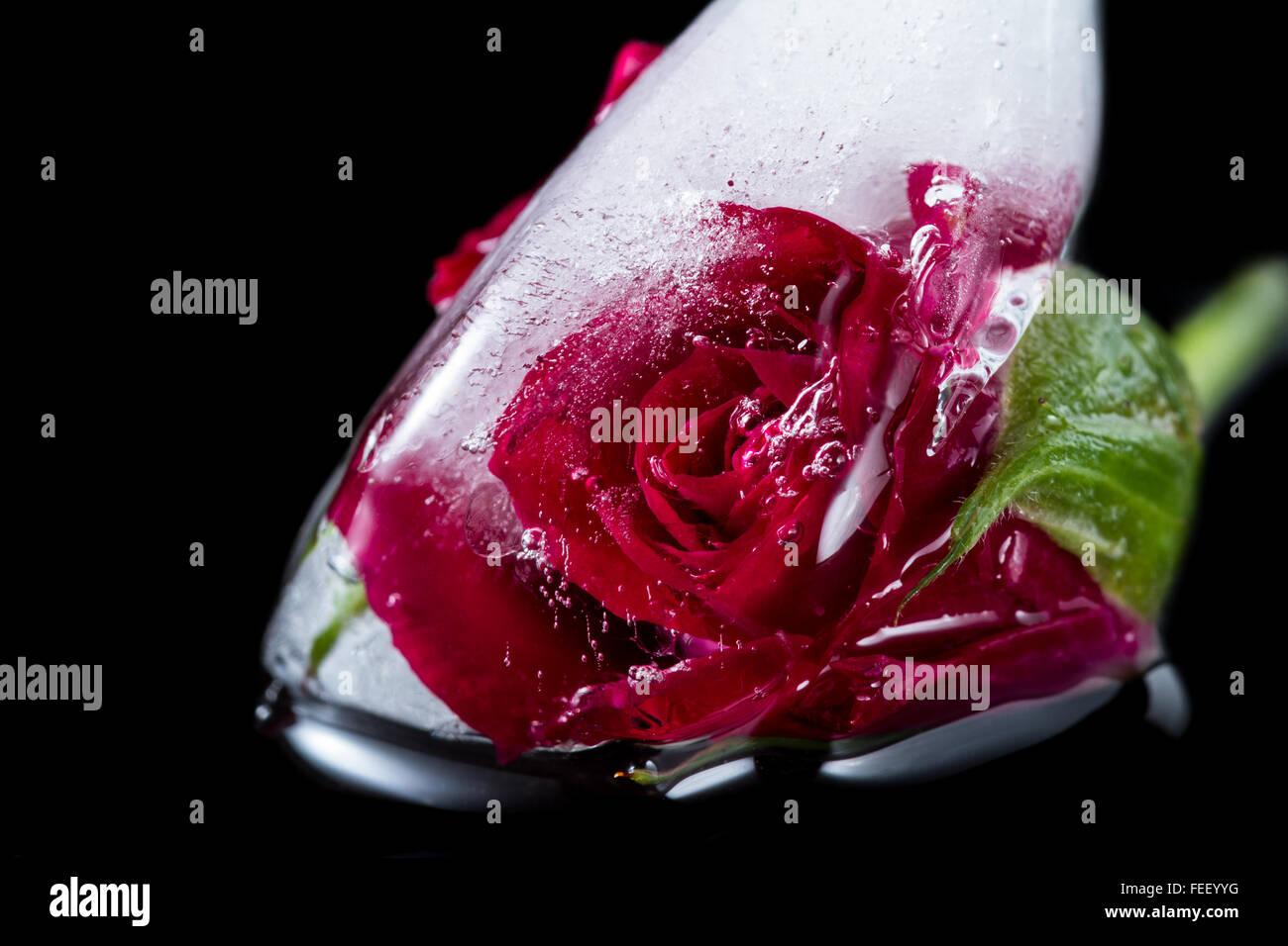 In prossimità di una piccola rosa rossa congelati in un cubo di ghiaccio aggiungendo linee belle e bolle utilizzando l'elemento di distorsione con artistiche Foto Stock