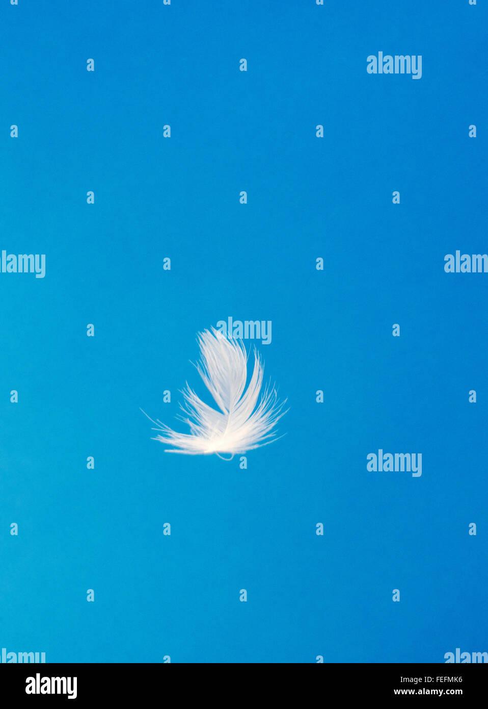 Close-up di oca bianca di piume floating contro un cielo blu Immagini Stock
