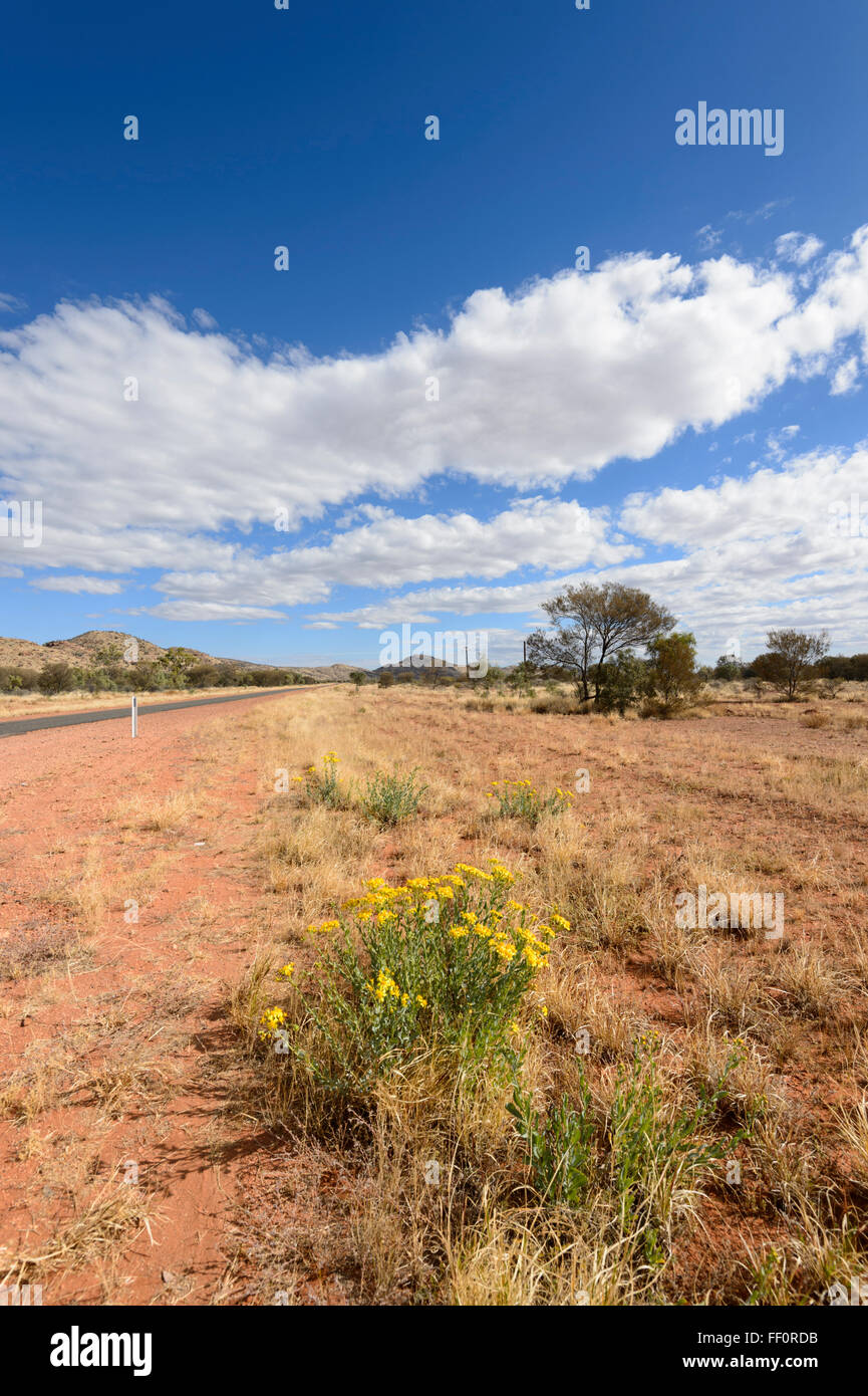 Bush nei pressi di Alice Springs, Territorio del Nord, l'Australia Immagini Stock