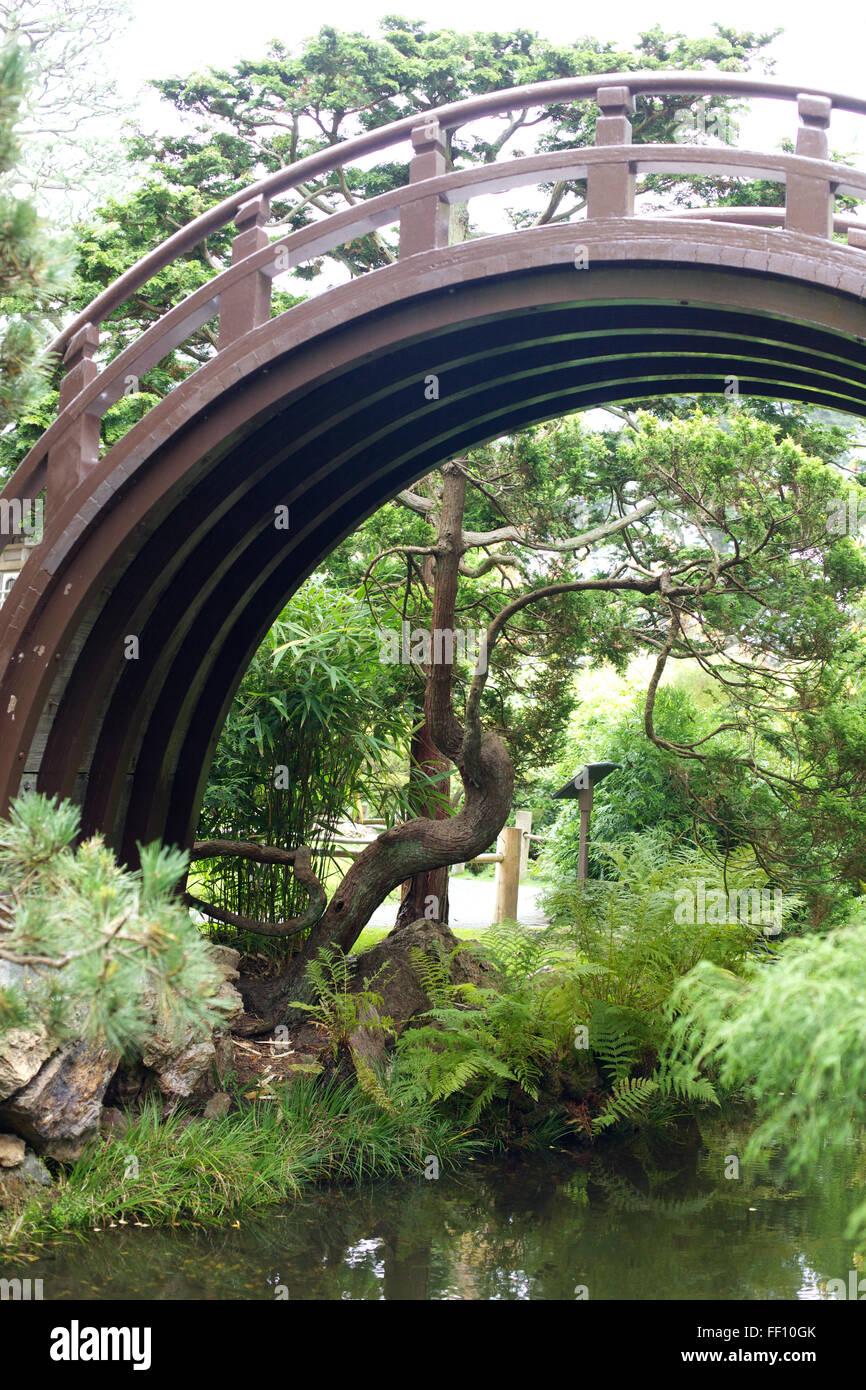 Un ponte di circolare in un giardino giapponese. Immagini Stock