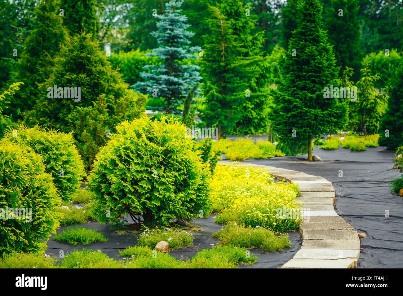 Architettura Del Verde sentiero in pietra nel parco giardino. verde cespugli
