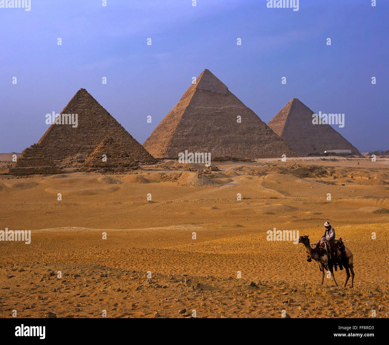 Il cammello e le piramidi di Giza, plateau, Il Cairo, Egitto, Africa Immagini Stock