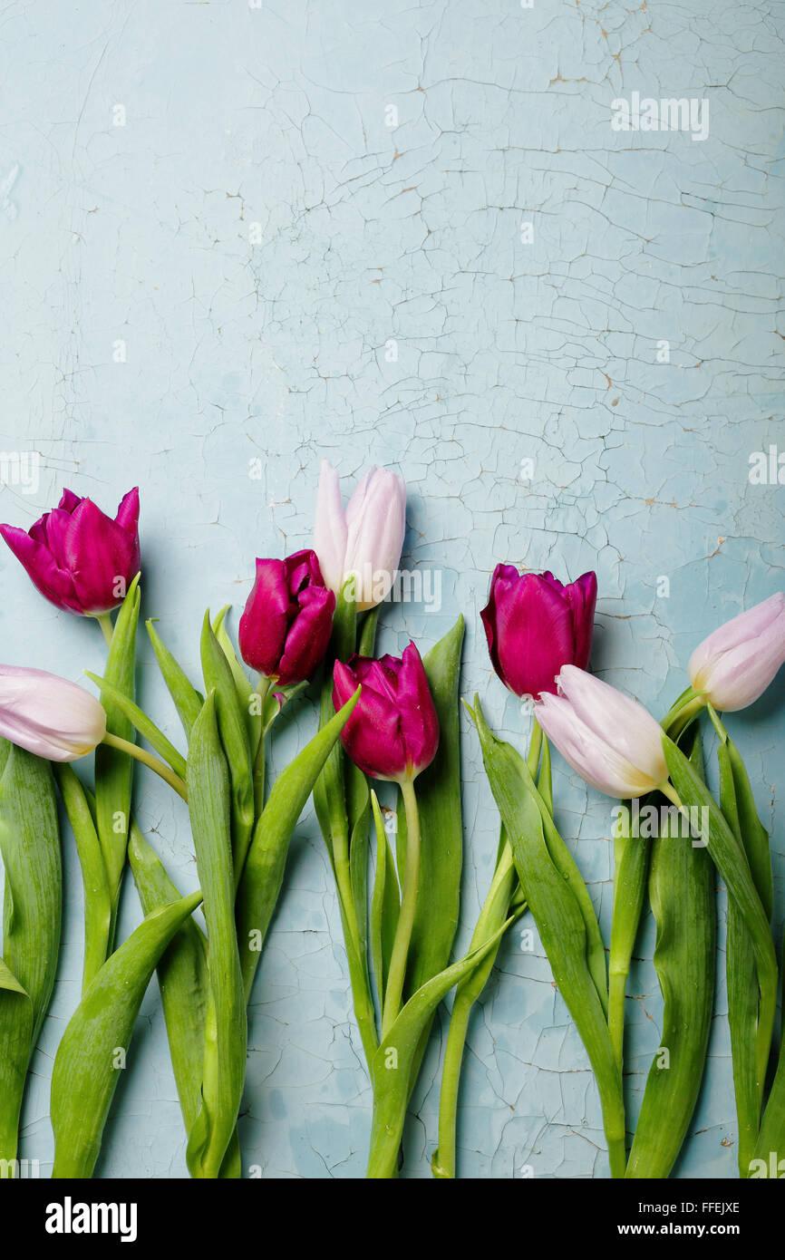 I tulipani sul vecchio backlground, fiori vista superiore Immagini Stock