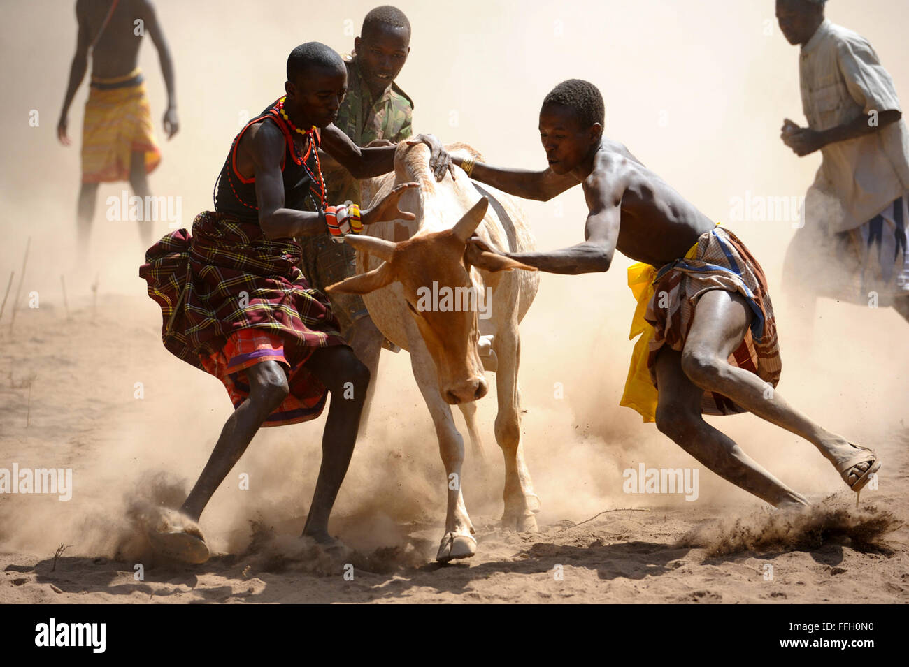 Gli uomini locali tentativo di sottomettere un runaway bull Aug.t 5, 2012 in Daaba, Kenya. Combined Joint Task Force Immagini Stock