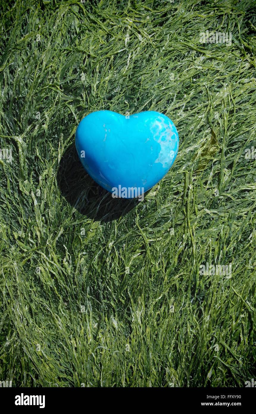 Cuore blu pietra sagomata su alga Immagini Stock