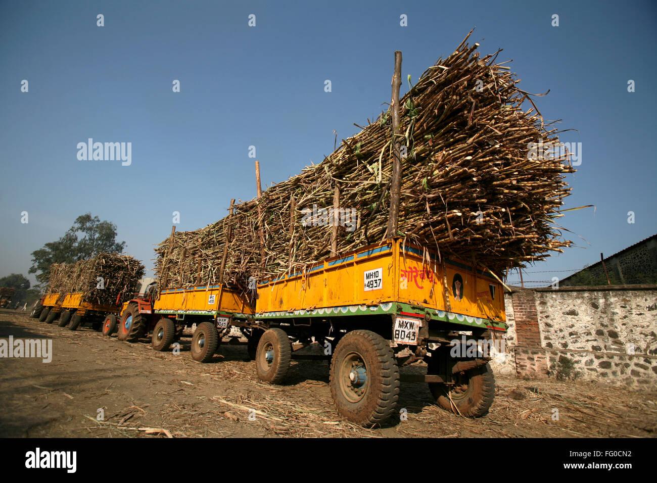 Carichi di canna da zucchero in carrelli trainato da un trattore parcheggiato in coda nella fabbrica di zucchero Immagini Stock