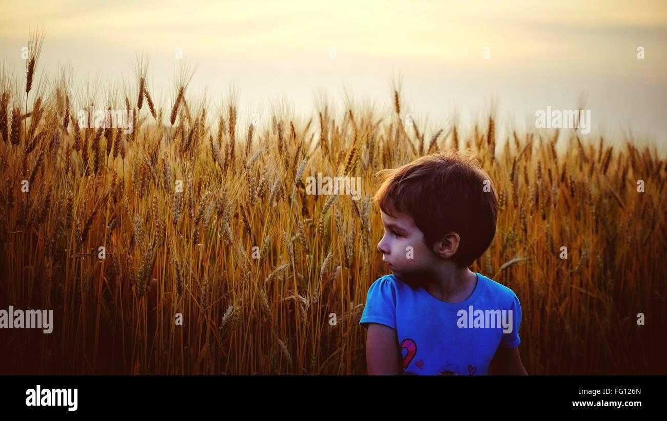 Le ragazze in piedi nel campo di raccolto contro il cielo chiaro Immagini Stock