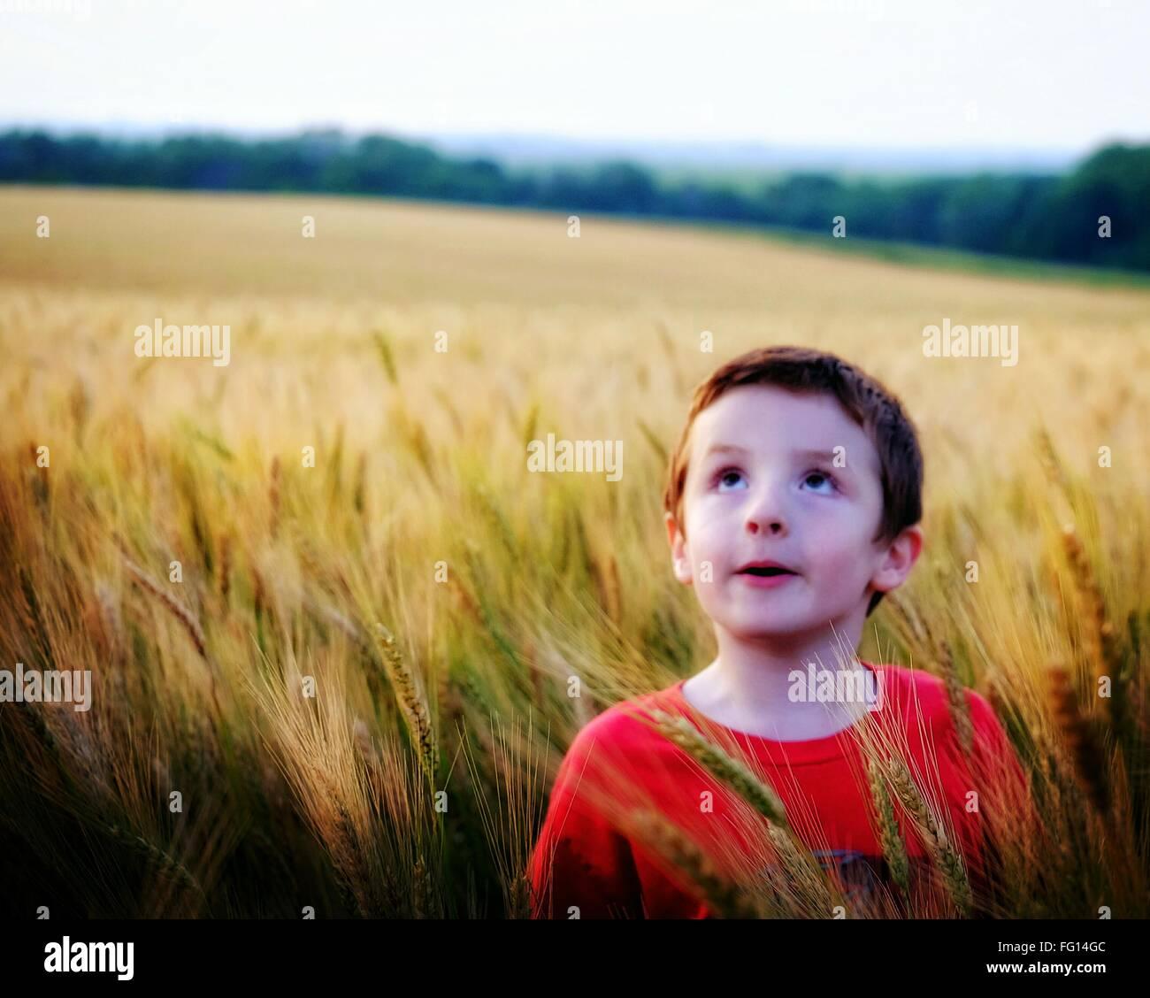 Ragazzo in piedi nel campo di grano e guardando in alto Immagini Stock