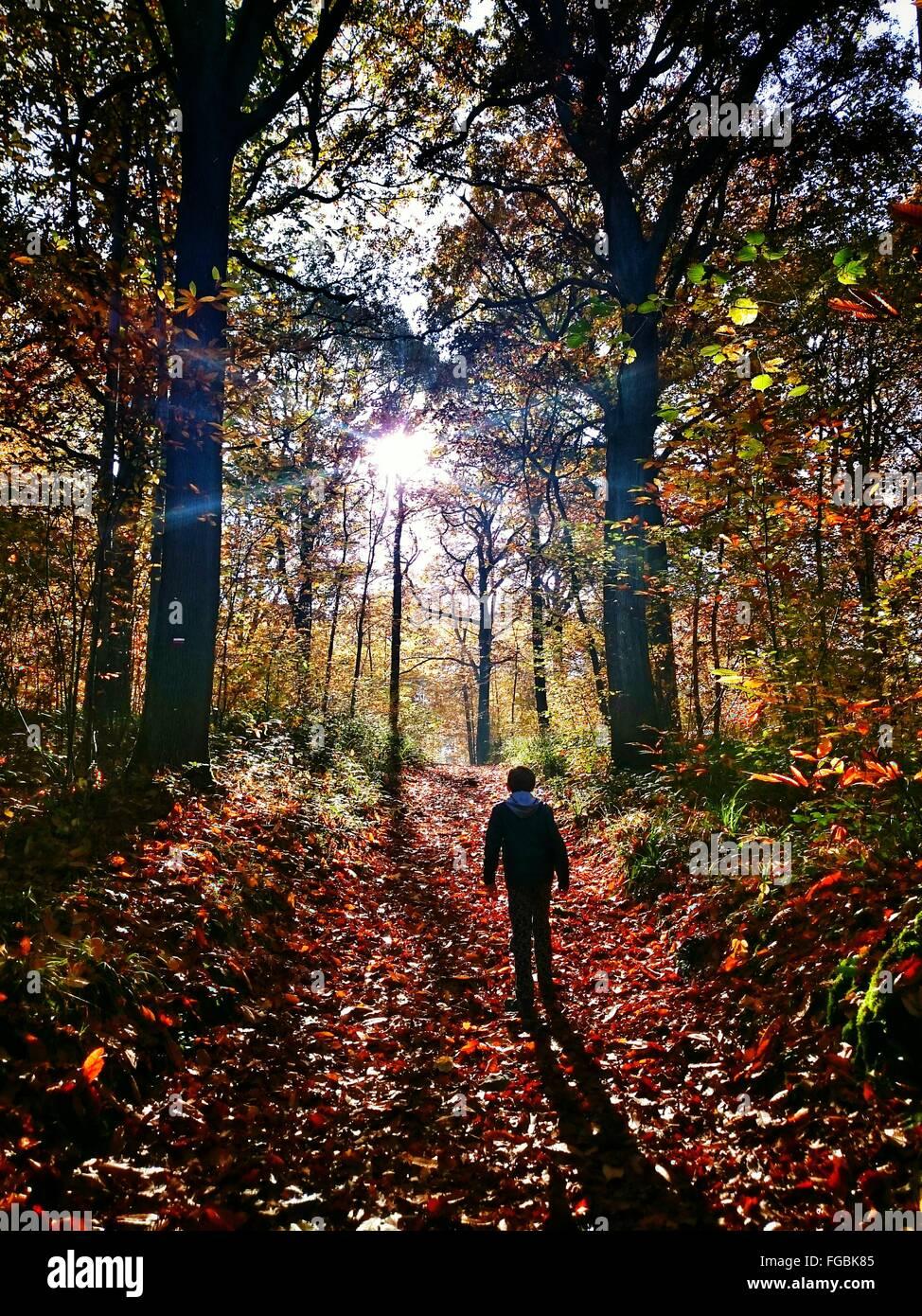 Vista posteriore del ragazzo in foresta durante l'Autunno Immagini Stock