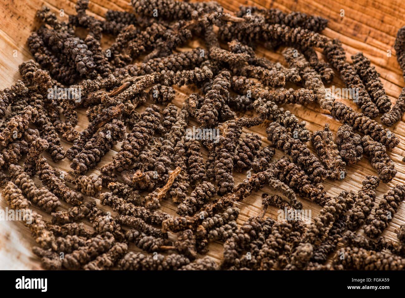 Piperaceae Piper longum, lungo il pepe, Javanese pepe, Indiano indonesiano pepe lungo l'India, Bengali pepe, spice, Foto Stock