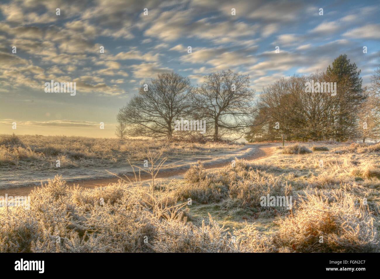 Paesaggio invernale a Puttenham comune, Surrey, Inghilterra, con gelo, alberi nudo, cielo blu e soffici nuvole bianche. Immagini Stock