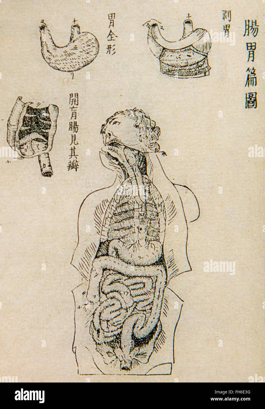 Pagina interna di Kaitaishinsho, traduzione giapponese di anatomia olandese prenota Ontleedkundige Tafelen, dal Immagini Stock