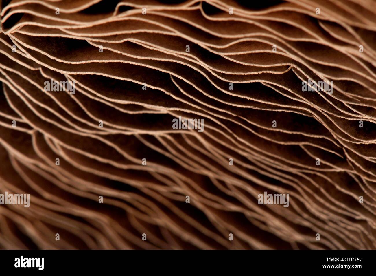Il lato inferiore del campo di grandi dimensioni che mostra del fungo branchie - disegno astratto Foto Stock