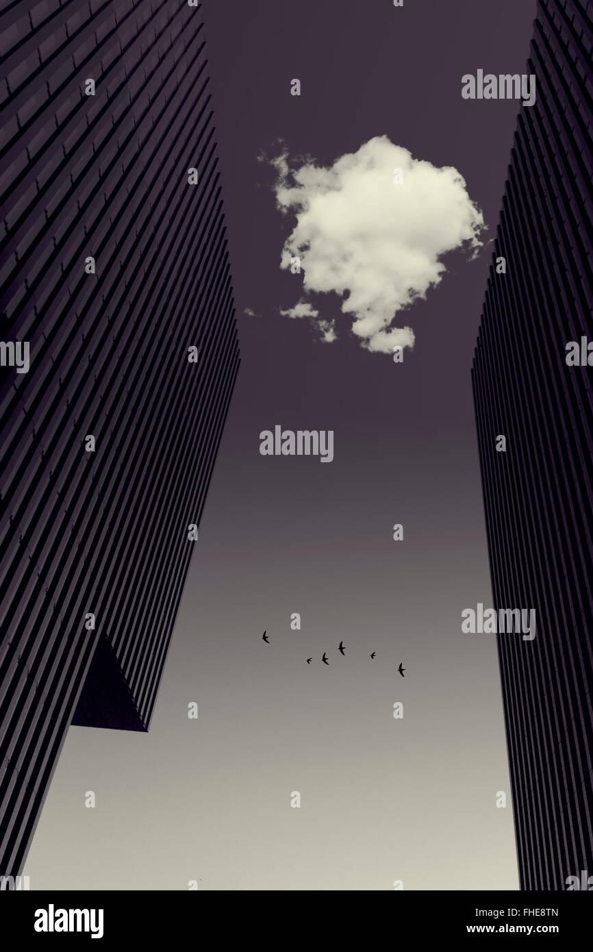 Il Cloud tra torri di uffici, uccelli in volo, manipolato digitalmente Immagini Stock
