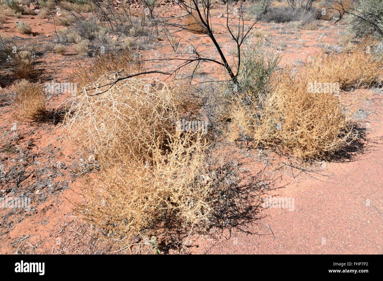 Vegetazione nel deserto, Territorio del Nord, l'Australia Immagini Stock