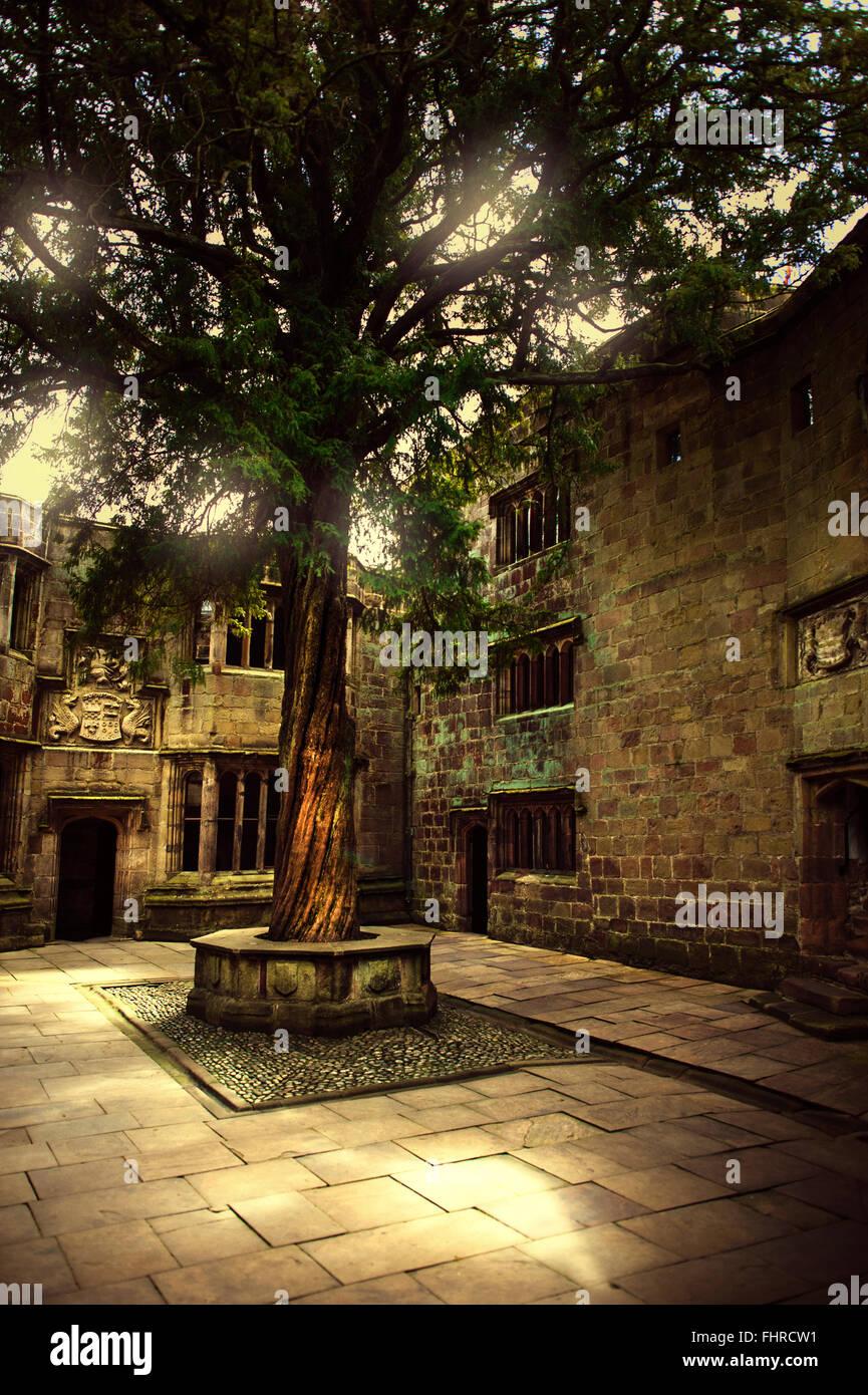 Cortile del castello con un vecchio albero bellissimo Foto Stock