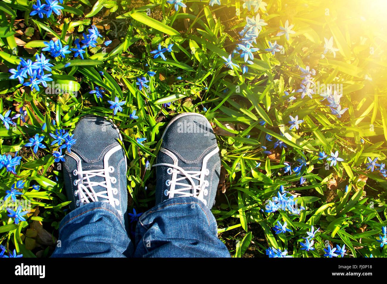 Piedi piedi su Scilla fiori nel parco Immagini Stock