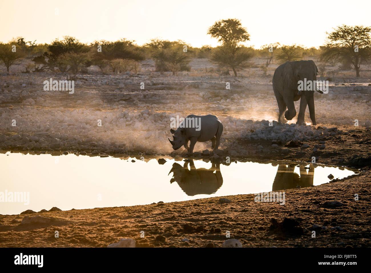 Rhino e un elefante Immagini Stock