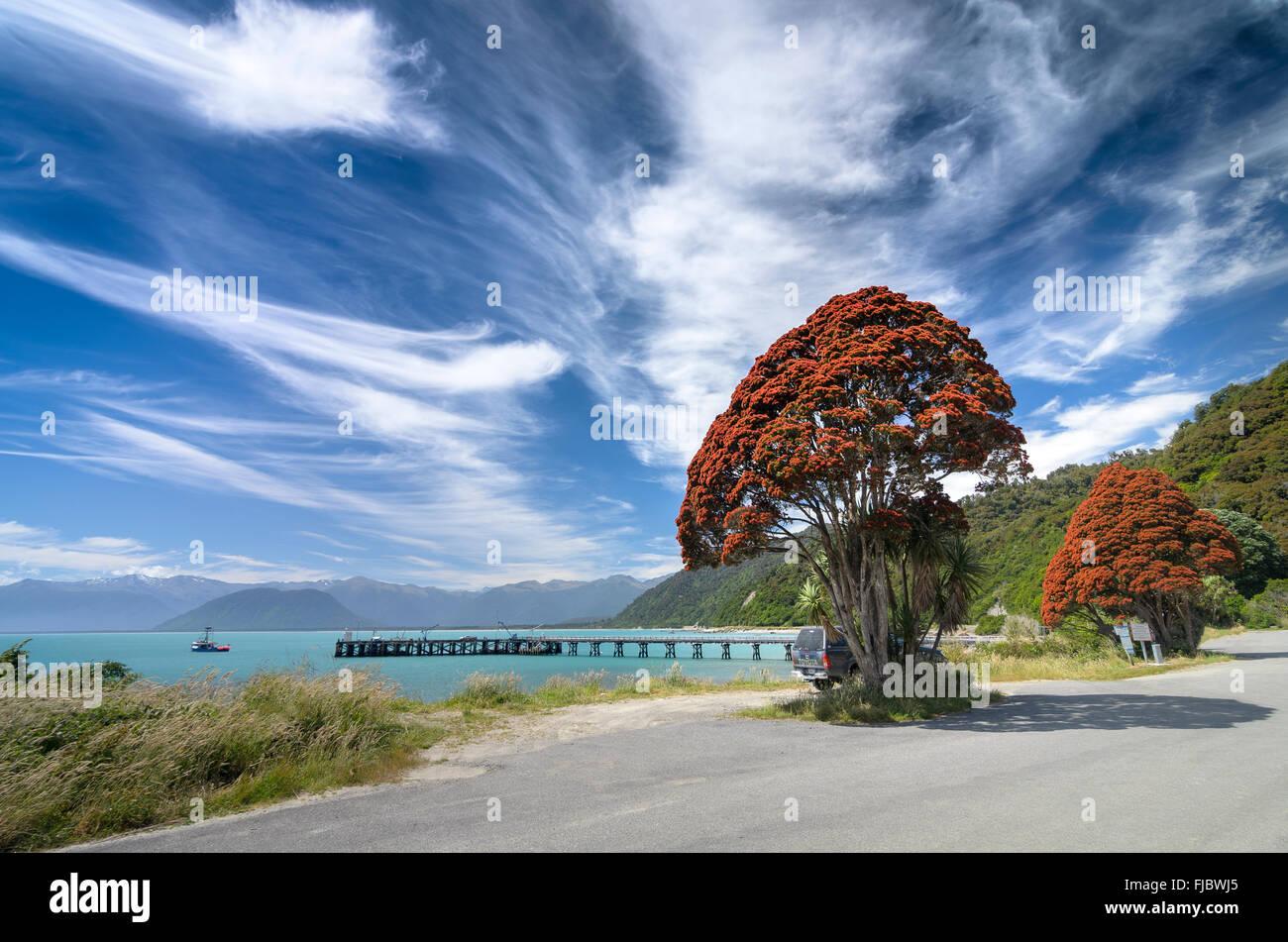 Fioritura rossa Nuova Zelanda albero di Natale (Metrosideros tomentosa), con cielo nuvoloso, Jackson Bay, West Coast, Immagini Stock
