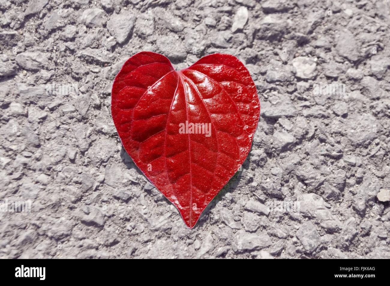 Cuore rosso forma foglia sul roccioso del pavimento di asfalto Immagini  Stock 0d20ef48670