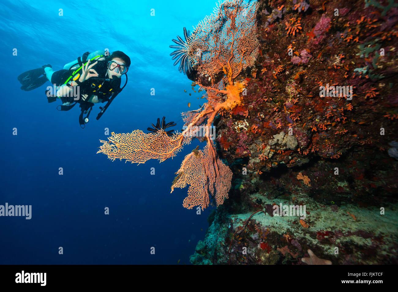 Scuba Diver esplorare una barriera corallina che mostra segno ok Immagini Stock