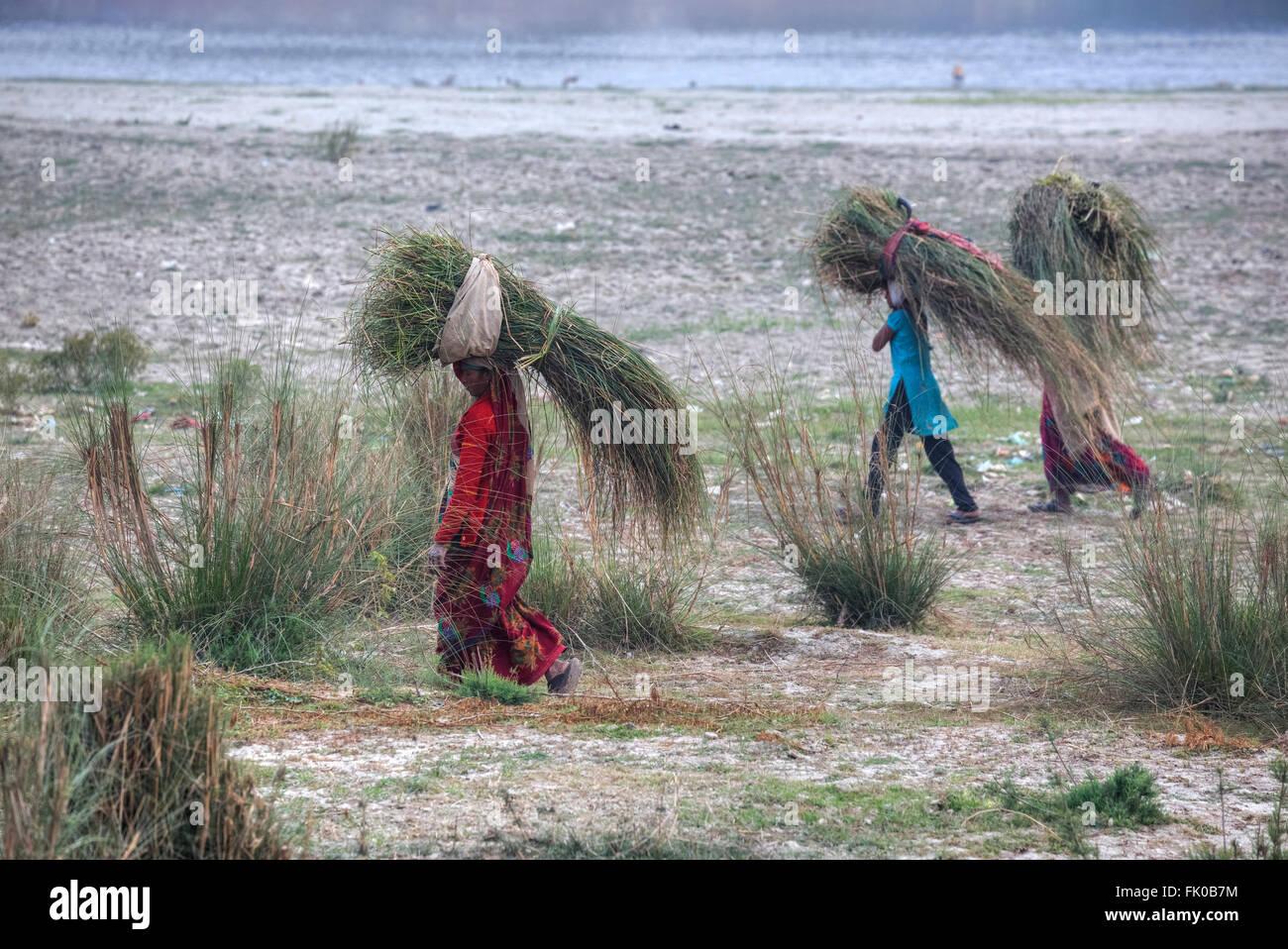 Le donne in Agra, Uttar Pradesh, India erba portante sulla loro testa Immagini Stock