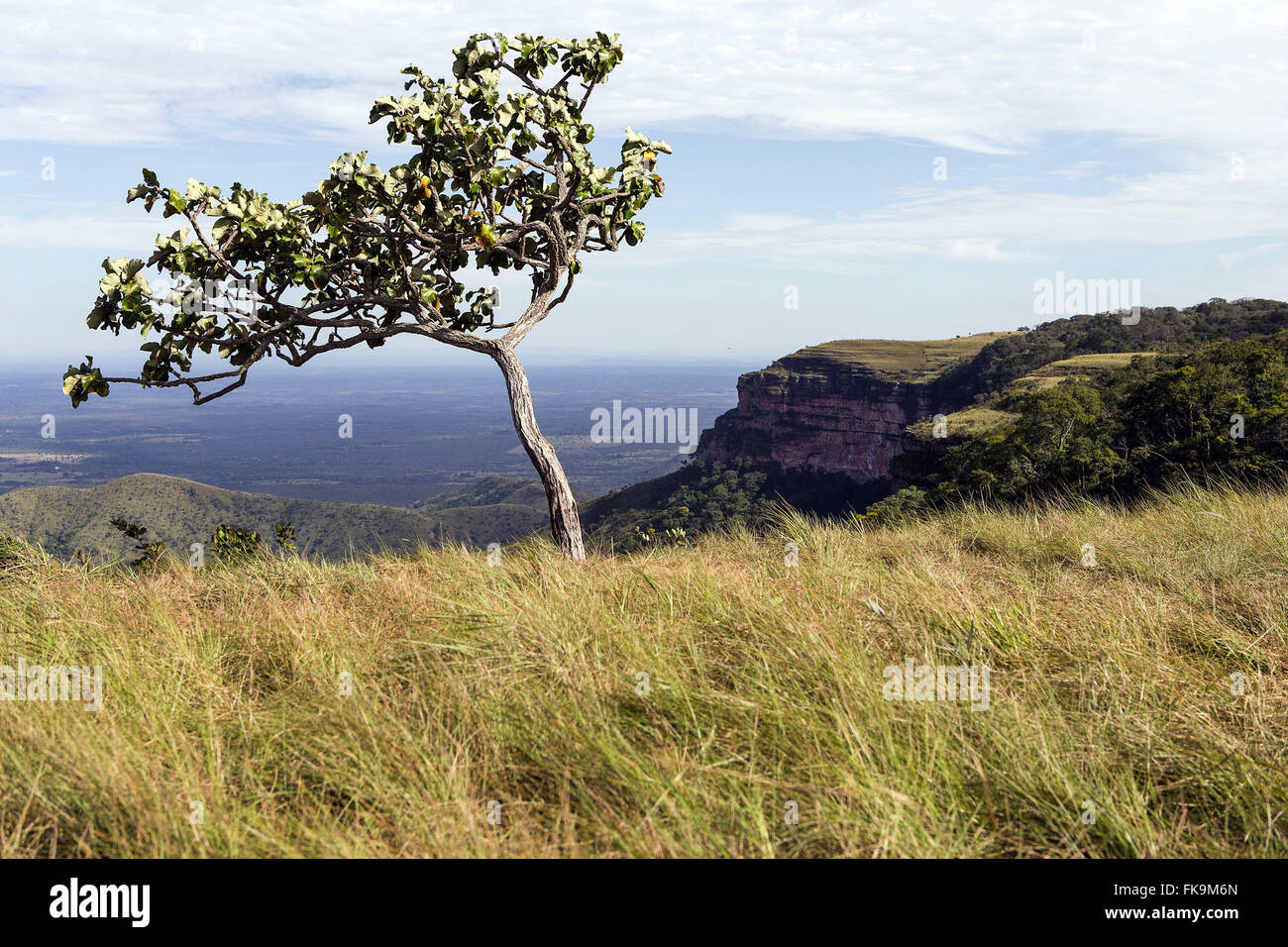 Alta Vista del cielo e l'area di ??Chapada dos Guimaraes National Park Immagini Stock