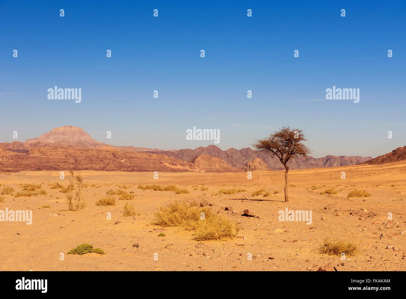Deserto secco e albero sinai egitto Immagini Stock