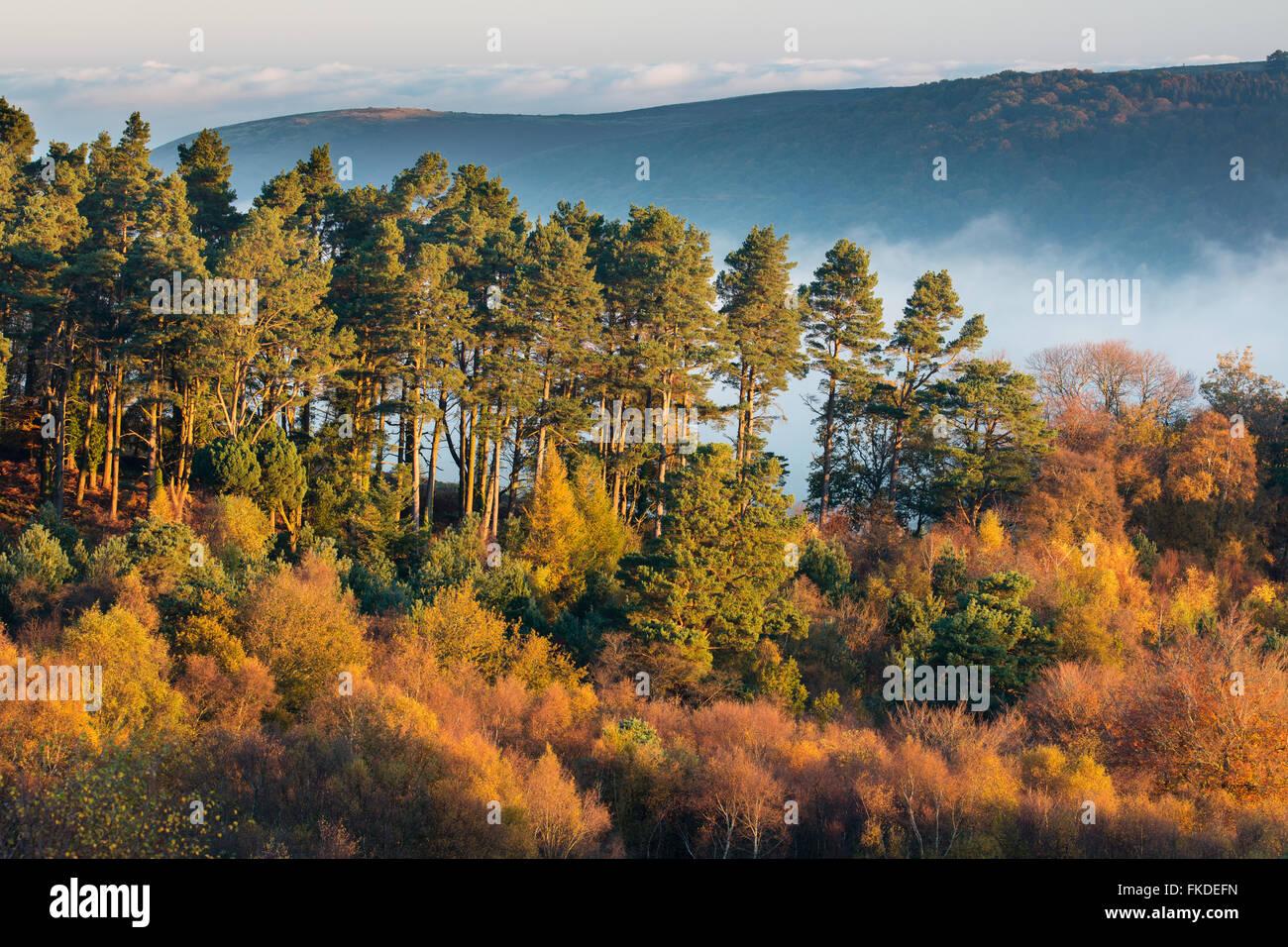 I colori autunnali nr Webber's Post, Parco Nazionale di Exmoor, Somerset, Inghilterra, Regno Unito Immagini Stock