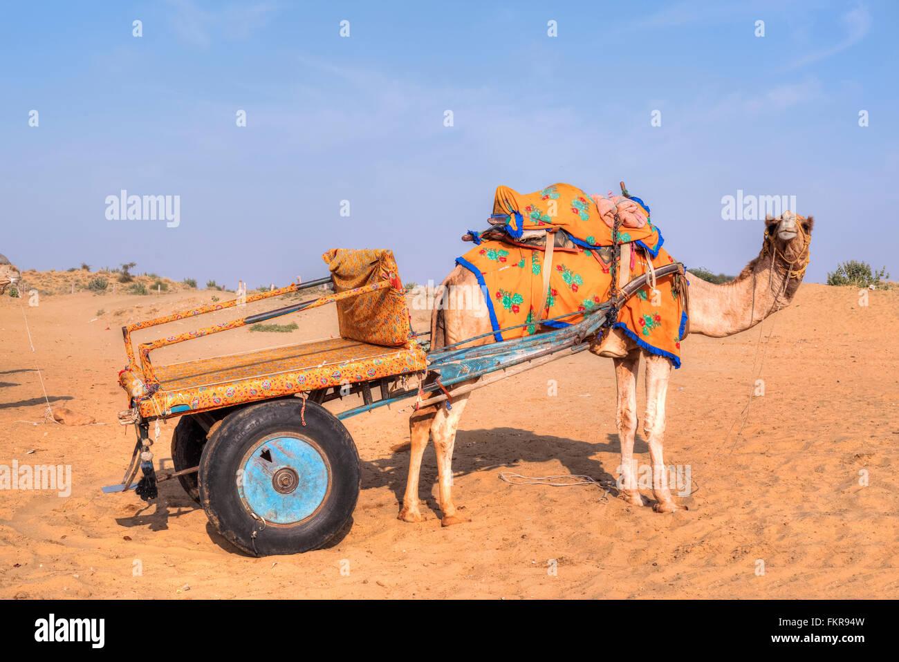 Carrello cammello nel deserto di Thar, Rajasthan, India Immagini Stock
