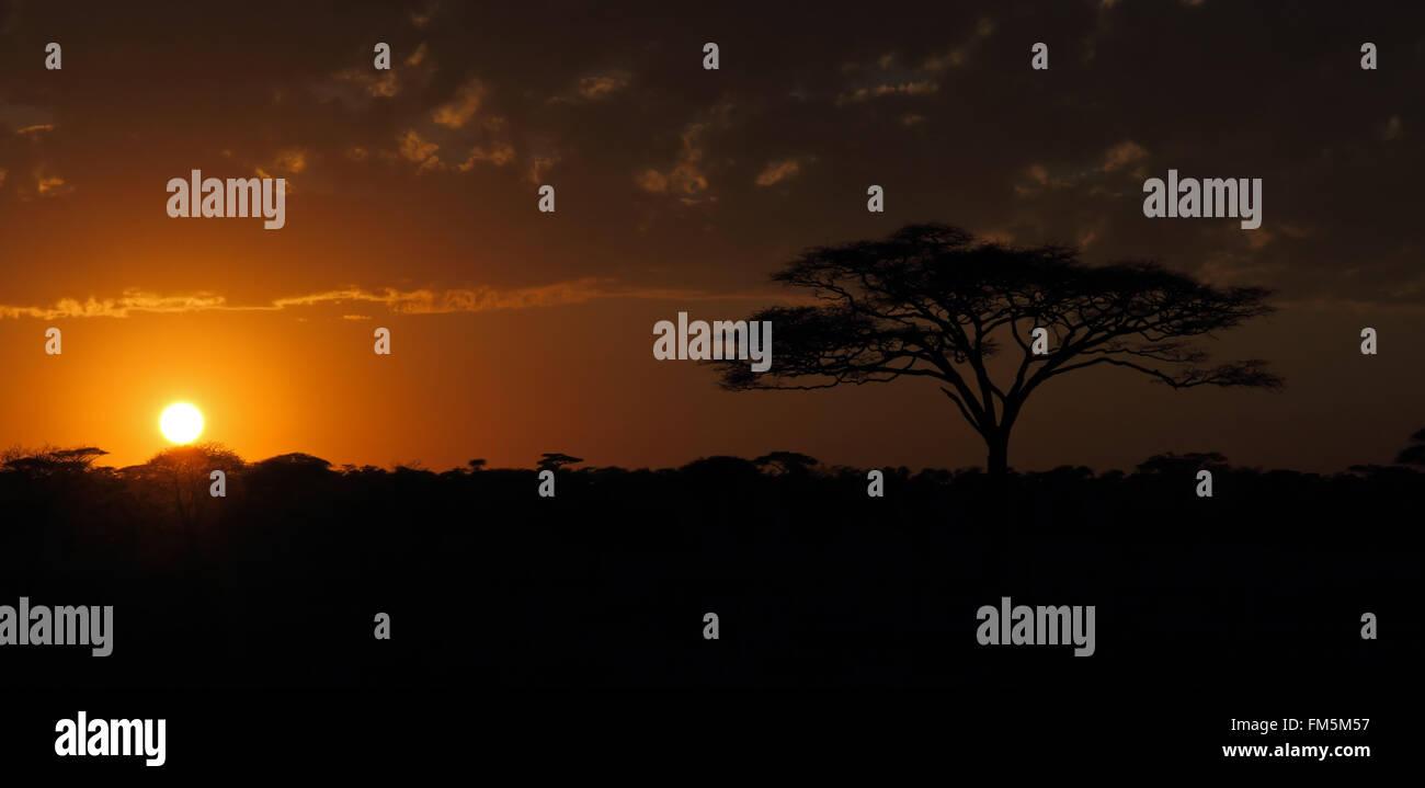 Tramonto sulle pianure del Serengeti di Tanzania Immagini Stock