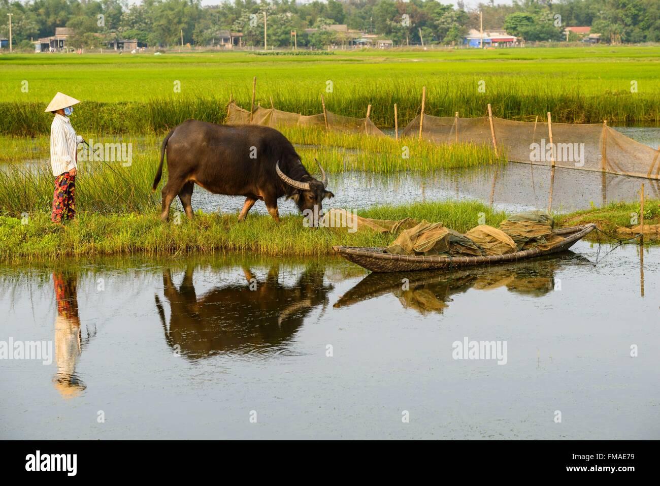 Il Vietnam, Thua Thien Huê provincia, Tam Giang laguna, contadino con il suo buffalo Immagini Stock