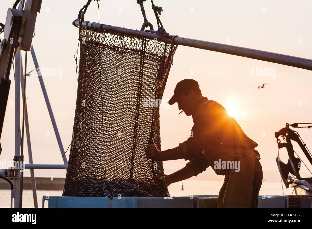 Francia, Finisterre, DOUARNENEZ, pescatore lo scarico di un filetto di pesce in padella Immagini Stock