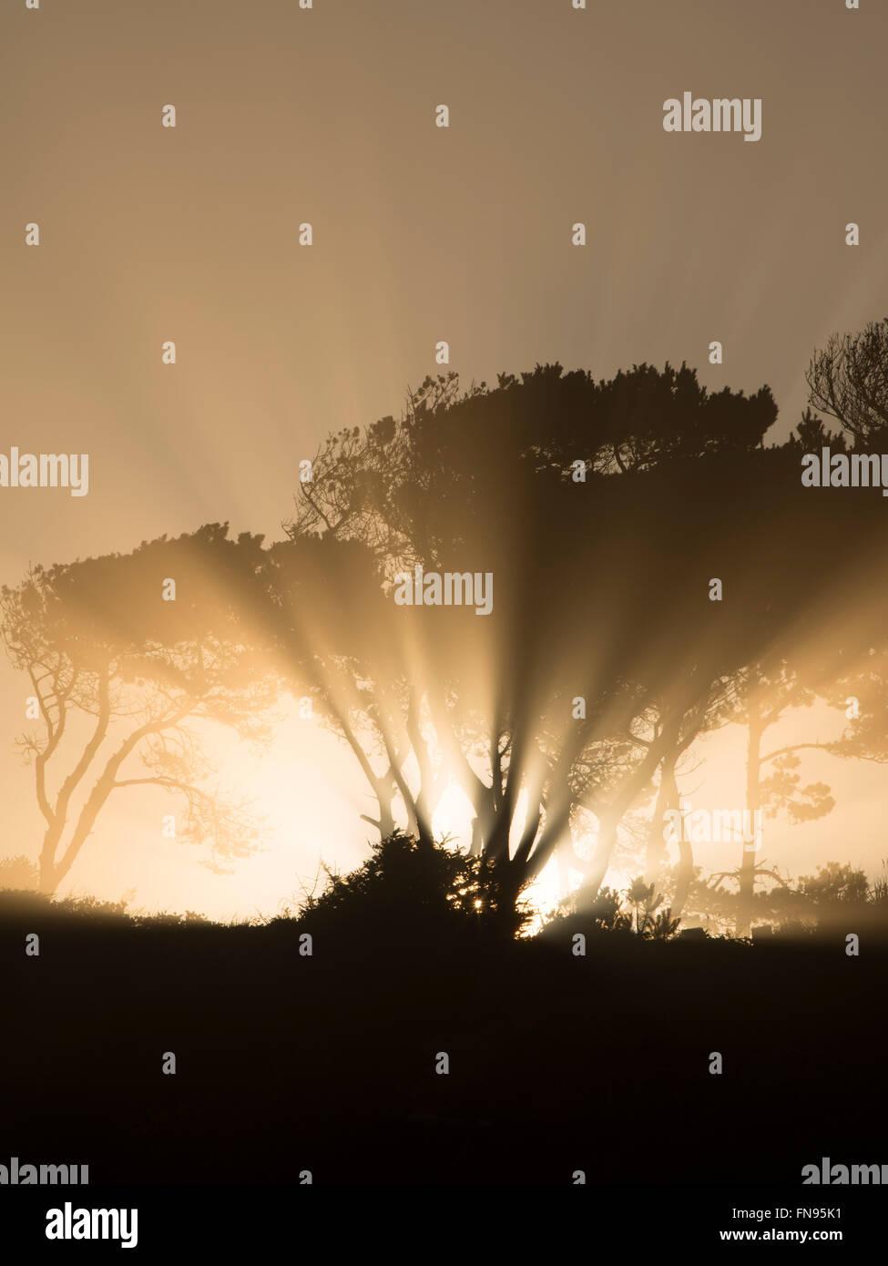 Sunburst a sunrise attraverso gli alberi a Devil's Conca Stato Area Naturale. Oregon Immagini Stock