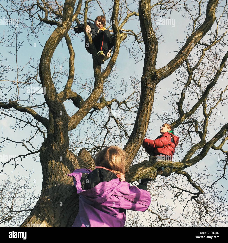 Tre bambini di arrampicarsi su un albero Foto Stock