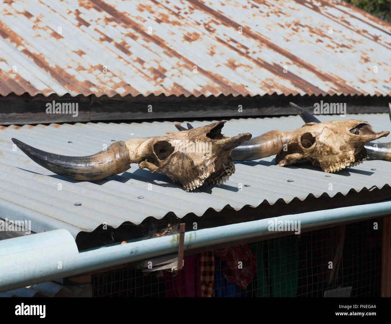 Bufalo d'acqua teschi sul tetto, credenza locale in Mindat, Stato Chin Stato, Myanmar Immagini Stock