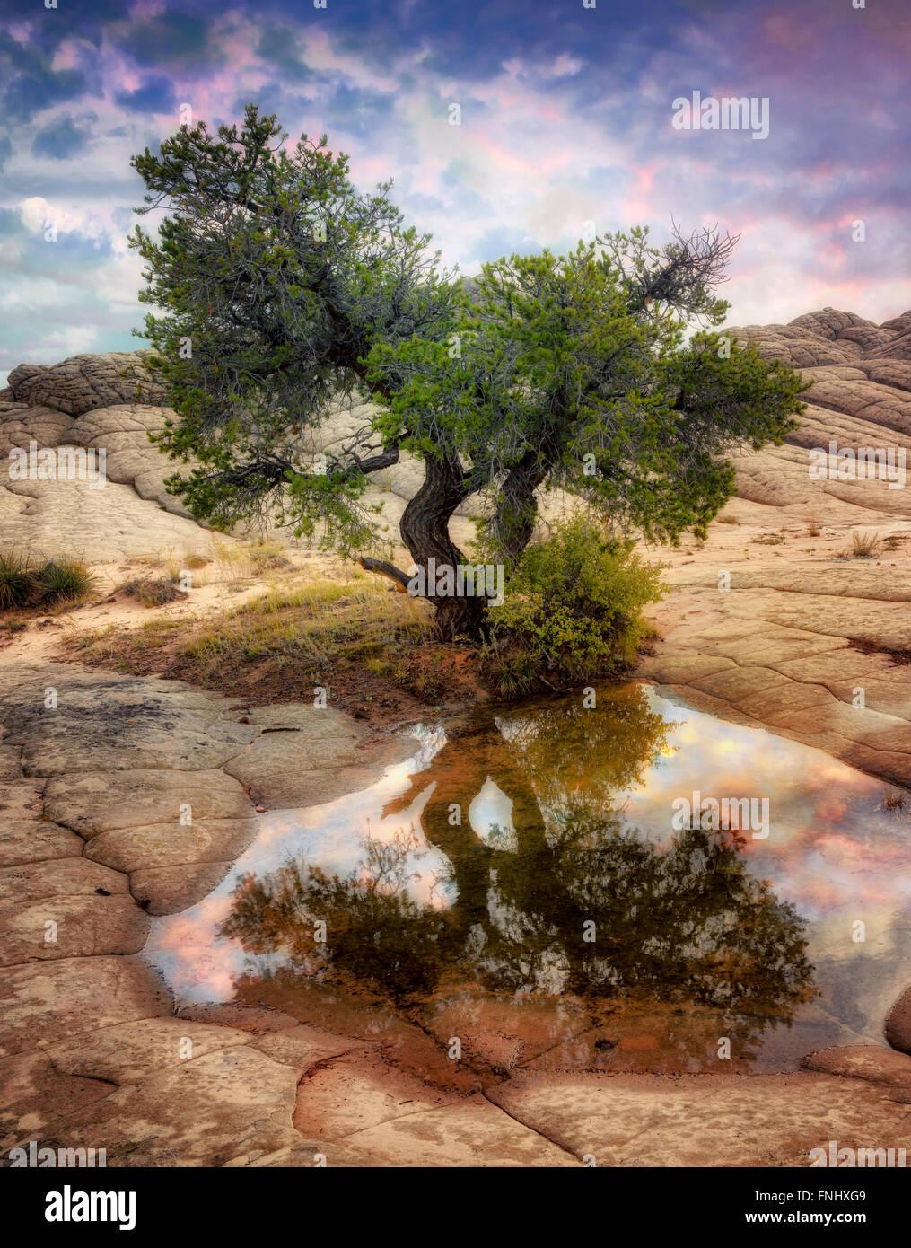 Tasca bianco con acqua di pioggia piscine. Vermilion Cliffs National Monument, Arizona Immagini Stock