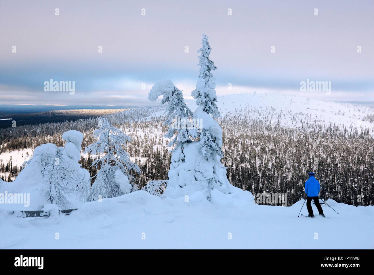 Neve pesante sulla Salla cadde. Salla ski resort. In profondità nel deserto di neve pesantemente laden alberi Immagini Stock