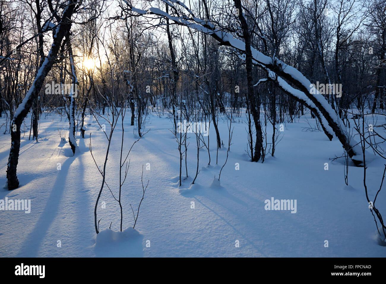 Neve sulla terra e copertura di rami, in Tromso. Immagini Stock